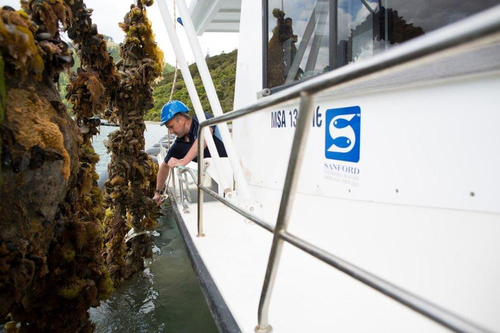 Caption: Checking Mussel lines