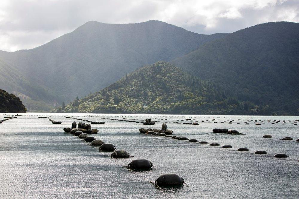 Caption: Mussel farm, Marlborough Sounds, New Zealand