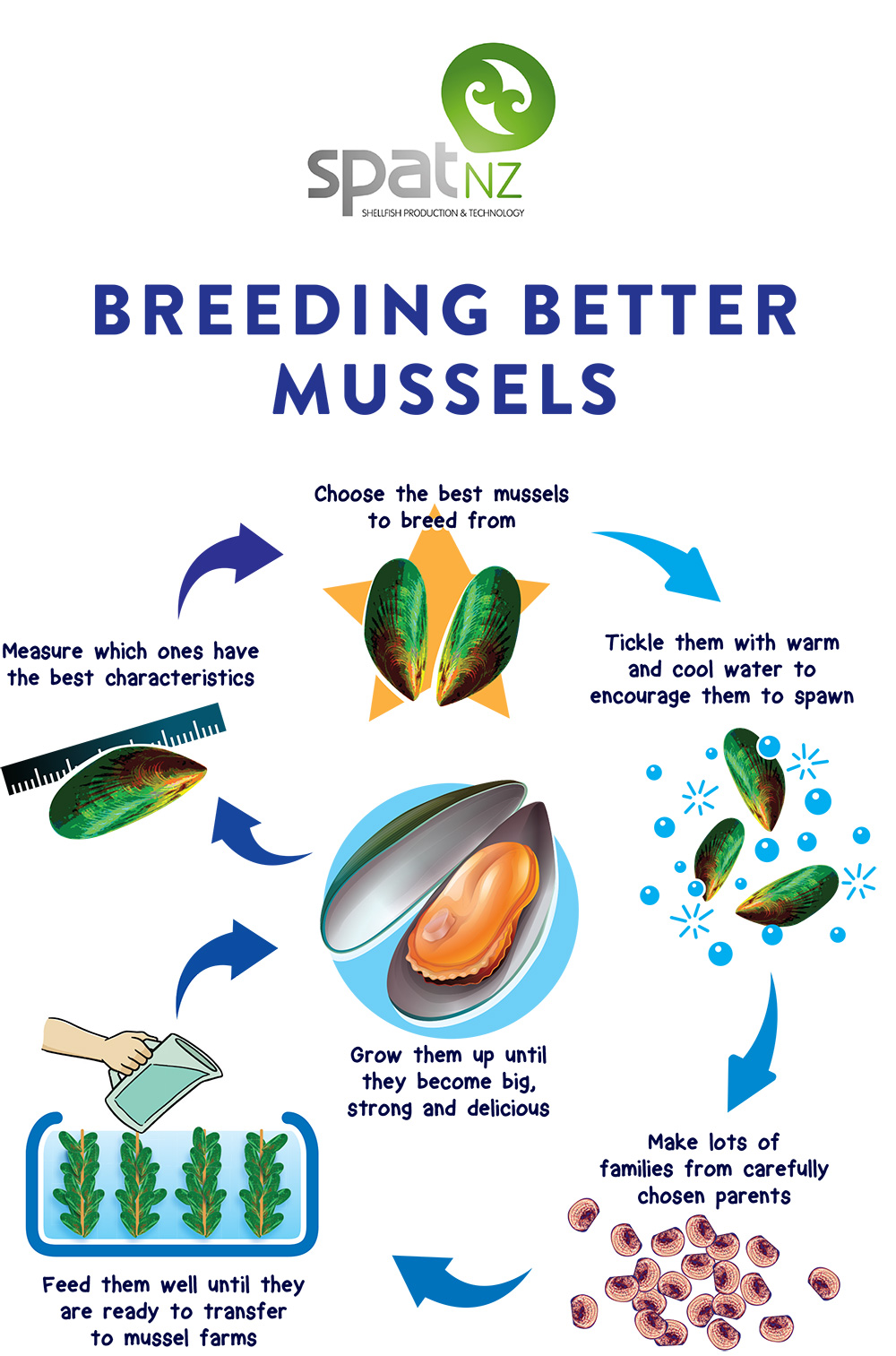 Caption: Mussel breeding schematic